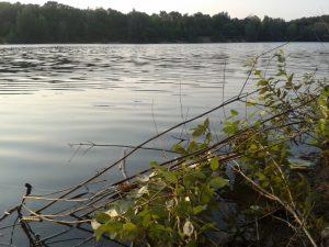 Feedbacks spiegeln unser Sein wie das Wasser